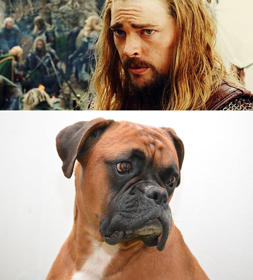 Eomer perro