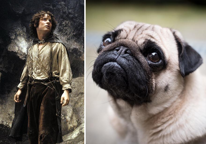 Frodo perro