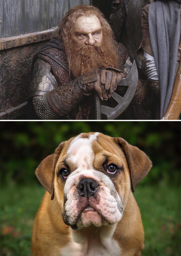 Gimli perro