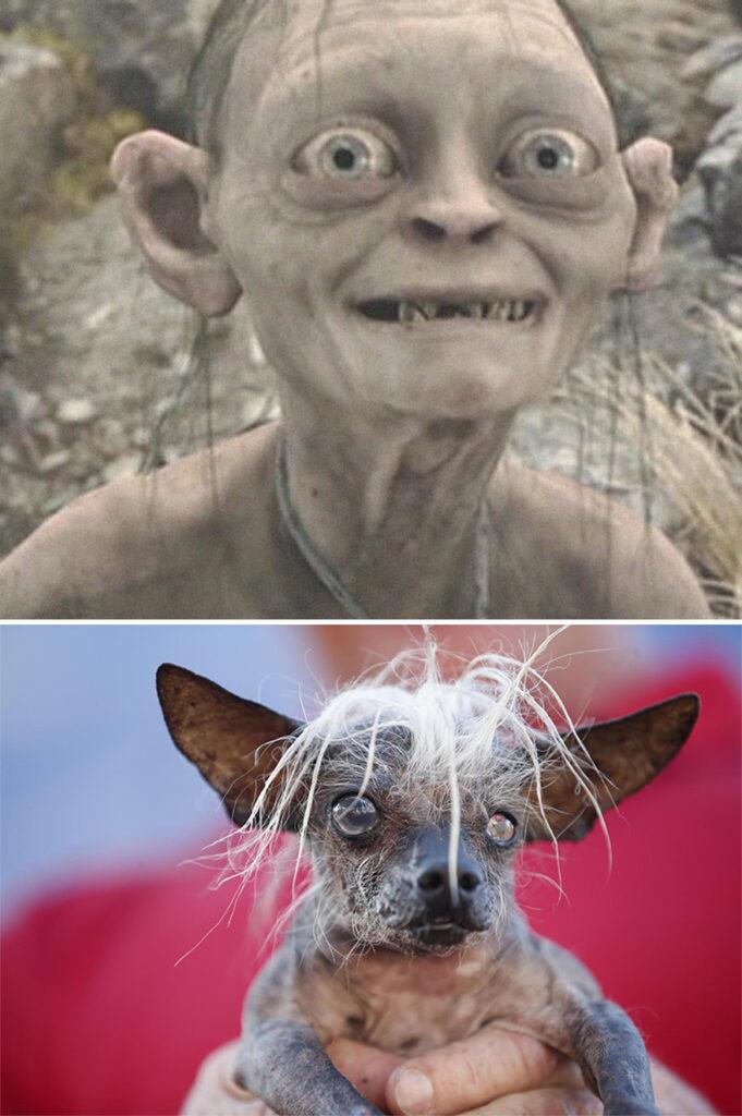 Gollum perro