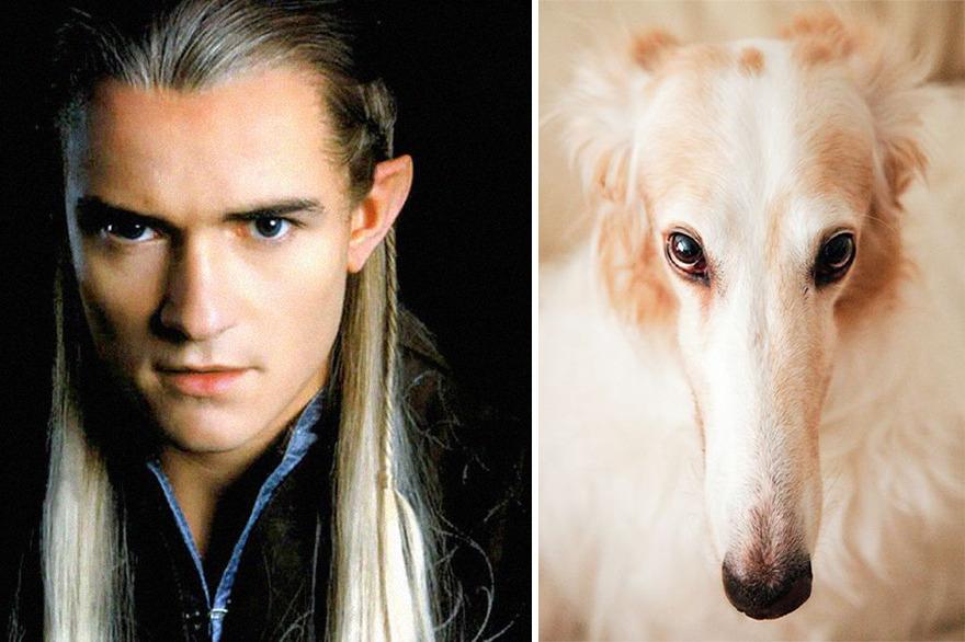Legolas perro