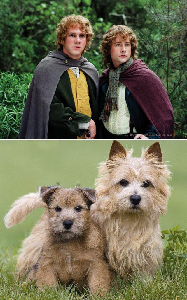 Merry y Pippin perros