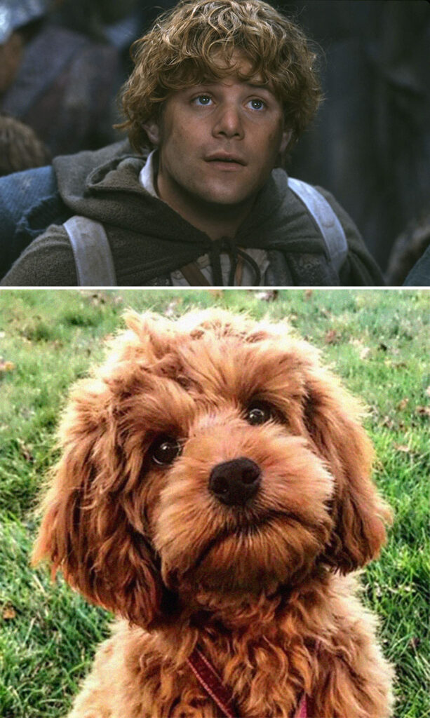 Sam perro