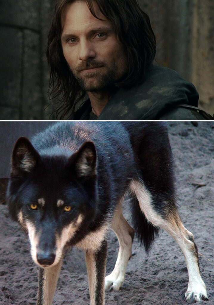 aragorn perro